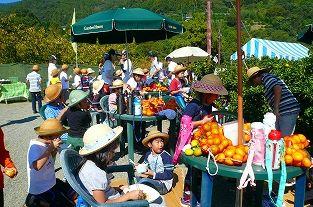 みかん狩りができる神奈川内藤園の画像