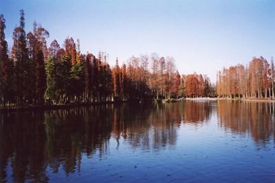 埼玉の遊び場別所沼公園の画像