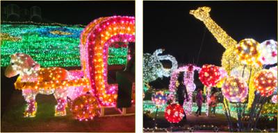 2014年クリスマスの東武動物公園のイルミネーションの画像