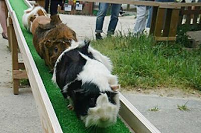 愛知観光地、遊びスポット愛知牧場、どうぶつ広場の画像