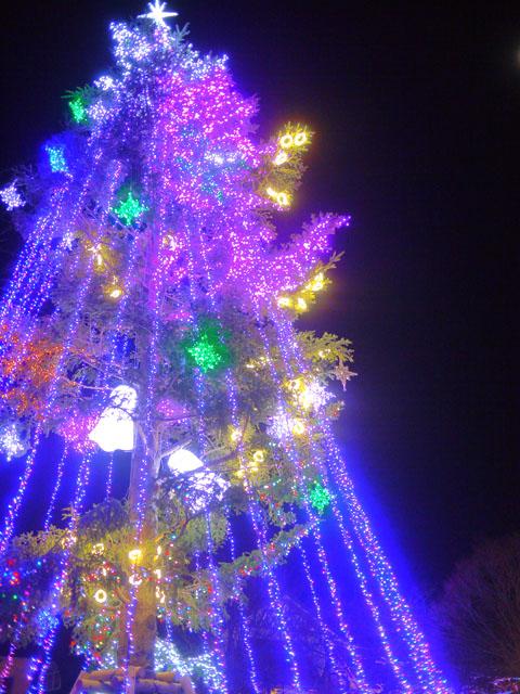 2014年モミの木のイルミネーションの画像