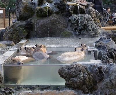 コアラに会える埼玉こども自然動物公園のイメージ画像