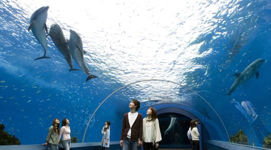 カウントダウンイベント東京子連れの水槽の画像