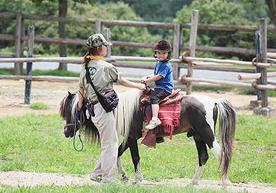 姫路の観光スポット姫路セントラルパークの乗馬画像