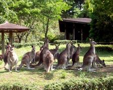 コアラやカンガルーのいる動物園のイメージ画像