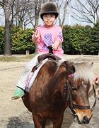 コアラのいる動物園の乗馬体験をする子どものイメージ画像