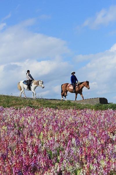 赤城にあるドイツ村で乗馬を楽しむイメージ画像