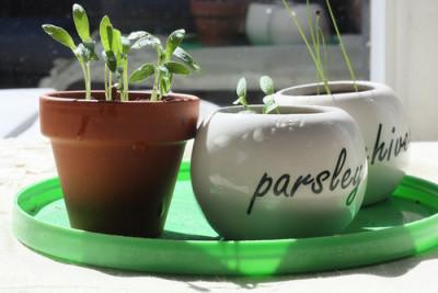 家庭菜園、自宅で野菜を育てるおすすめイメージ画像