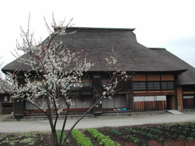 梅の花、仙台の国営みちのく杜の湖畔公園の画像