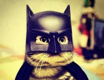 戦隊ショー猫ヒーローのイメージ画像