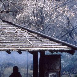 花の名所、梅まつり、三渓園の画像