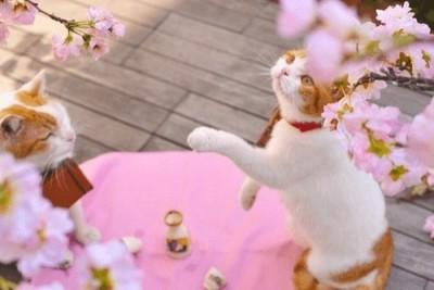 梅の名所に子連れでおでかけのイメージ画像