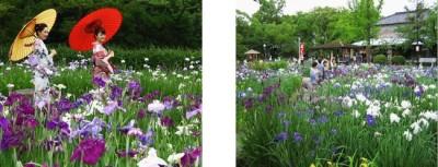 花見をしに名古屋・知立公園におでかけの画像01