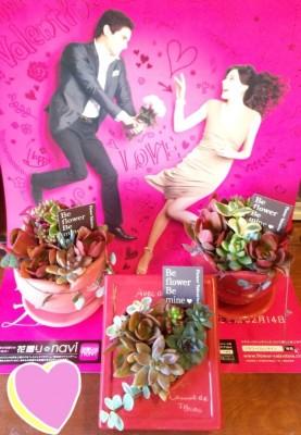 名古屋、おすすめ、おしゃれ、花屋、多肉植物の画像