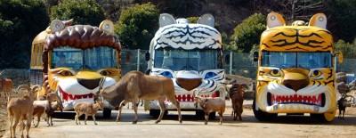 関東群馬サファリパークの画像