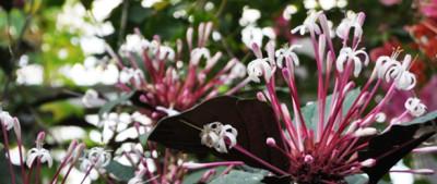 花見をしに名古屋の東山動植物園におでかけの画像01