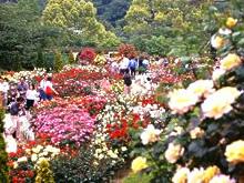 花見をしに名古屋の東山動植物園におでかけの画像03