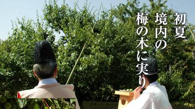 梅の花の名所・岩津天神の画像03