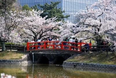 桜の花見におすすめな亀城公園の画像