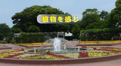 花見をしに名古屋・豊橋ののんほいパークにおでかけの画像01
