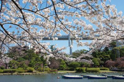 千葉公園で花見に子どもと行こうのイメージ画像