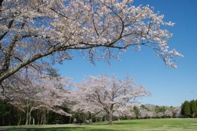 千葉泉自然公園で花見に子どもと行こうのイメージ画像