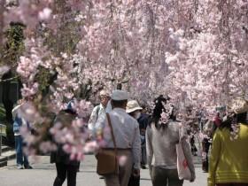 名古屋フルーツパークで花見に親子でおでかけのイメージ画像