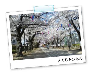 桜の花見におすすめな豊川市桜まつりの画像01