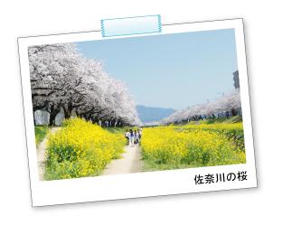 桜の花見におすすめな豊川市桜まつりの画像02