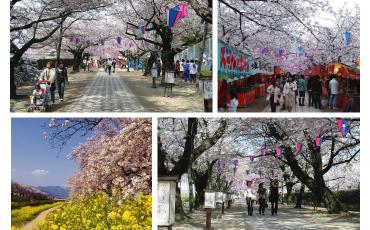 桜の花見におすすめな豊川市桜まつりの画像03