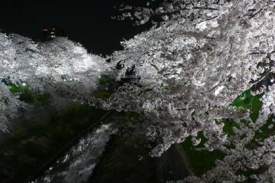 名古屋山崎川で花見に親子でおでかけのイメージ画像