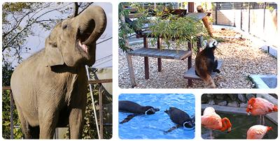 静岡桜えび生しらす旬日本平動物園の画像
