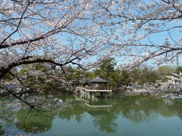名古屋鶴舞公園で花見に親子でおでかけのイメージ画像