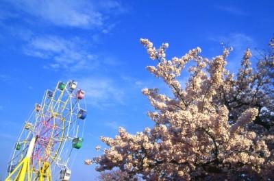 桜の花見におすすめな東京のテーマパークのイメージ画像