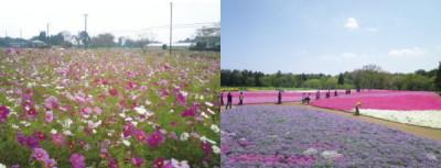 花とみどりの里