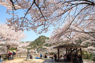 大阪のお花見スポット永楽ダムに行こうの画像
