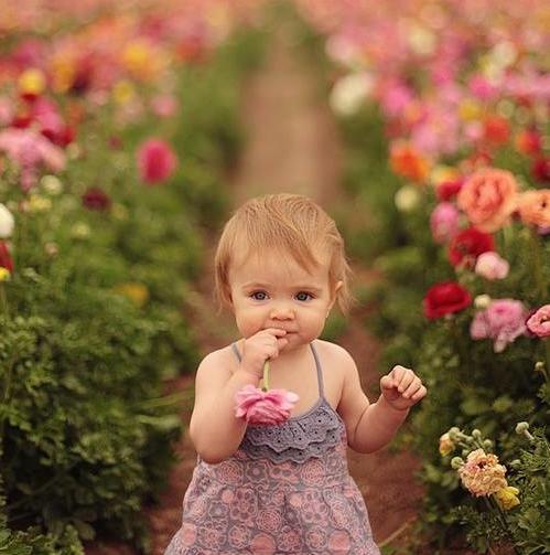 ポピー、花、花摘み、女の子の画像