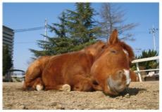 花見もバーベキューもそして乗馬も楽しみたい馬のイメージ画像