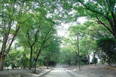 大阪のお花見スポット元茨木川緑地に行こうの画像