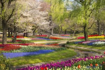 国営昭和記念公園のチューリップ畑の画像