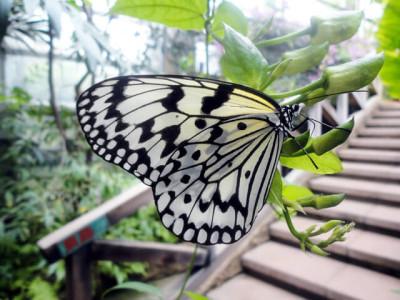 東京の遊び場で自然を学べる足立区生物園の画像