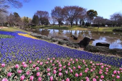 昭和記念公園花畑