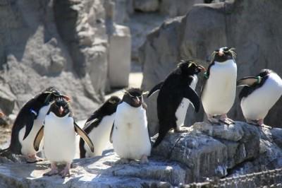 東京の遊び場・葛西臨海水族園にいるペンギンの画像02