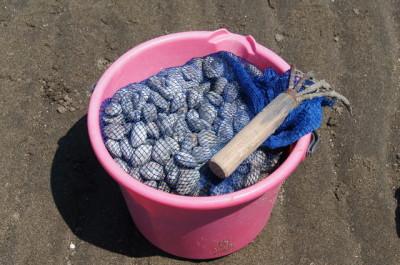 愛知県吉田海岸の潮干狩りのイメージ画像01