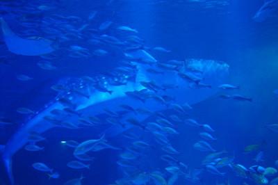 北陸新幹線で金沢といえばのとじま水族館もおすすめの館内水槽の画像
