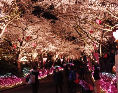 花見も楽しめる東京近郊のよみうりランドの画像