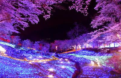 花見も楽しめる東京近郊のさがみ湖リゾートプレジャーフォレストの画像