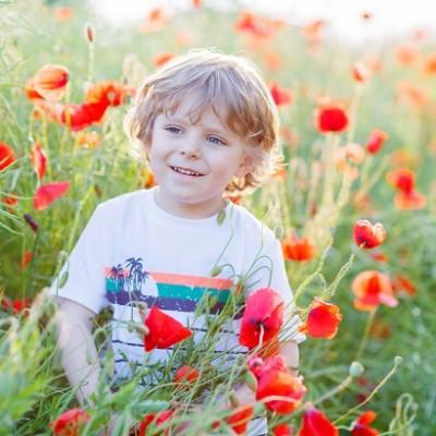 ポピー、花、花摘み、男の子の画像