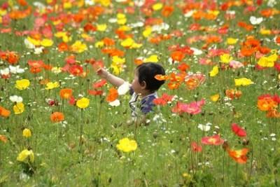 ポピー、花、花摘み、赤ちゃんとポピーの画像