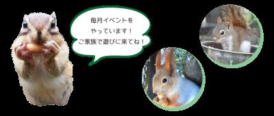 町田リス園の画像